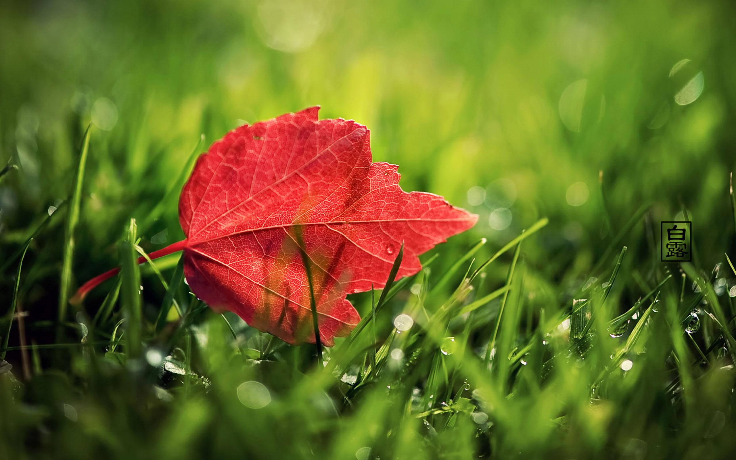 Windows 10 Wallpaper Red Leaf